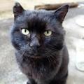Photos: お面を付けた猫
