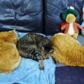 写真: 猫の体重測定