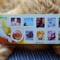 写真: 猫の切手