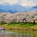 写真: 一目千本桜