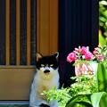 写真: 番猫