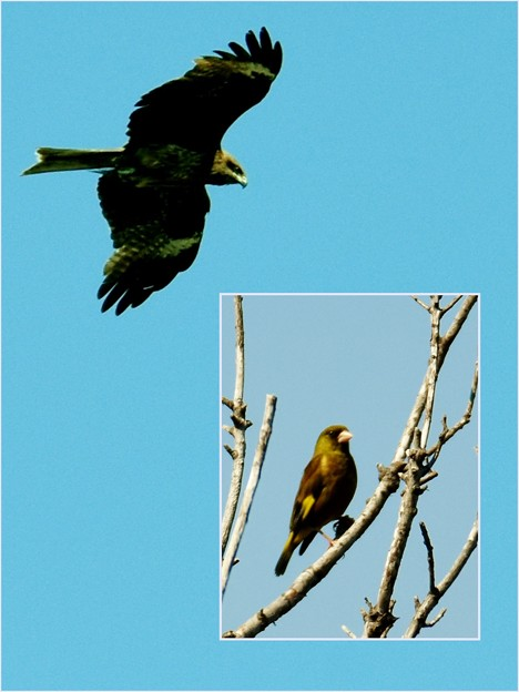 Photos: 鳥を撮りました