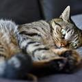 写真: 魔性の猫