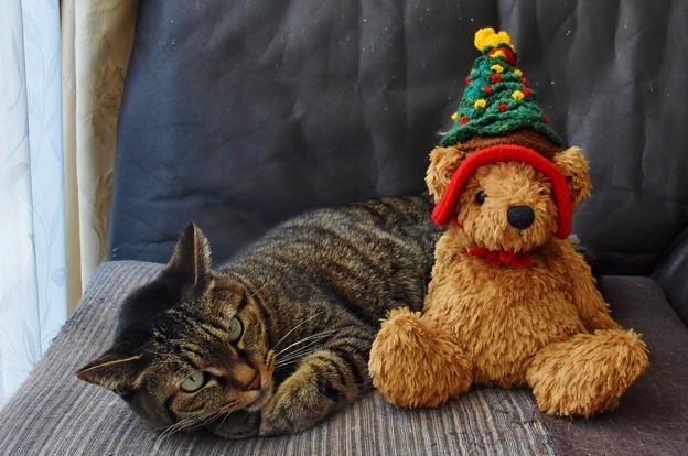 雉子とクリスマスツリー