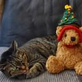 写真: 雉子とクリスマスツリー