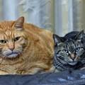 写真: 大きな猫と小さな猫