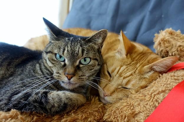 Photos: 猫の日