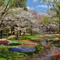 Photos: 桜の園