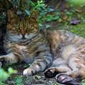 Photos: 秋の猫