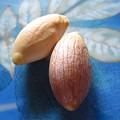 カニステルの種を蒔く 4