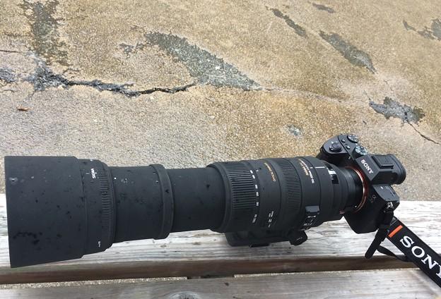 α7iii + SIGMA150-500mm