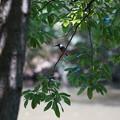 枝にカワセミくん 大阪◇豊中千里