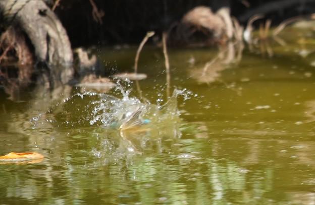 写真: お魚キャッチな