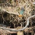 写真: 羽ばたきな
