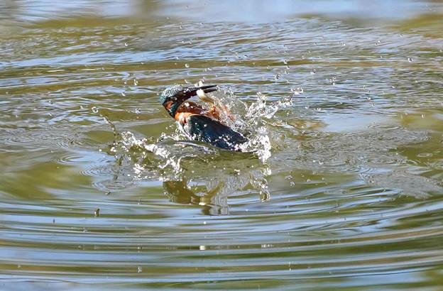 背泳ぎ、、、