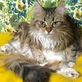Photos: 猫さま