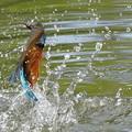 お魚ゲット!!!!