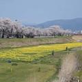 Photos: 春の散歩道2016.4-24