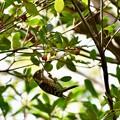写真: 木の実、美味しいよ♪(//∇//)