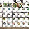 写真: ワサビ菓子(他)カレンダー2016-1