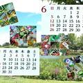 Photos: ワサビ菓子(他)カレンダー2016-5、6