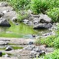 Photos: ちょっと遠いけど…水浴び…( ̄∀ ̄;)