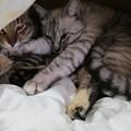 写真: 覗くとぎゅうぎゅうに詰まる金銀姉弟
