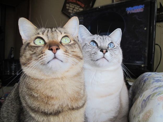 一点を見つめる姉弟