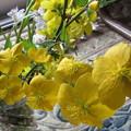 写真: 黄金の山吹色