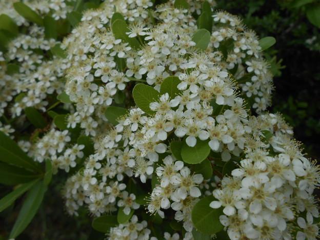 白い花が咲いてたー♪♪
