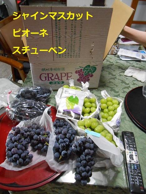 豪華な葡萄を送ってもらいました