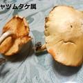 写真: お寺のケヤキの切り株に発見