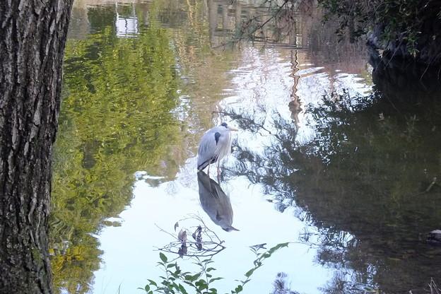 噴水池で餌を待つ