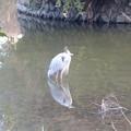 多少は自分でも魚を獲ろうとしてるのかな