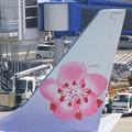 春色の航空機~♪