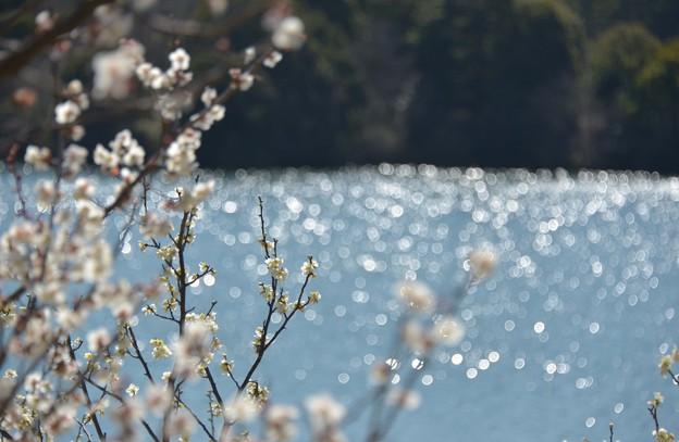 写真: 佐布里池の水面~♪