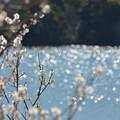 佐布里池の水面~♪