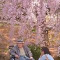 誰もが好きな桜~♪