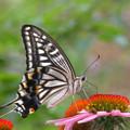 花と蝶々~♪