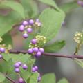 写真: 小紫~♪