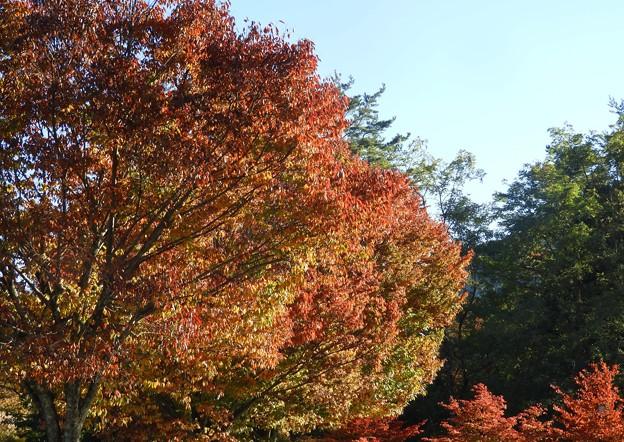麓の紅葉~♪