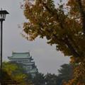 晩秋の名古屋城~♪