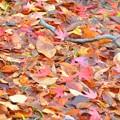写真: カラフル落ち葉~♪