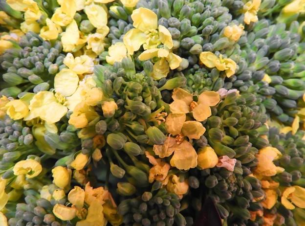 ブロッコリーの花~♪