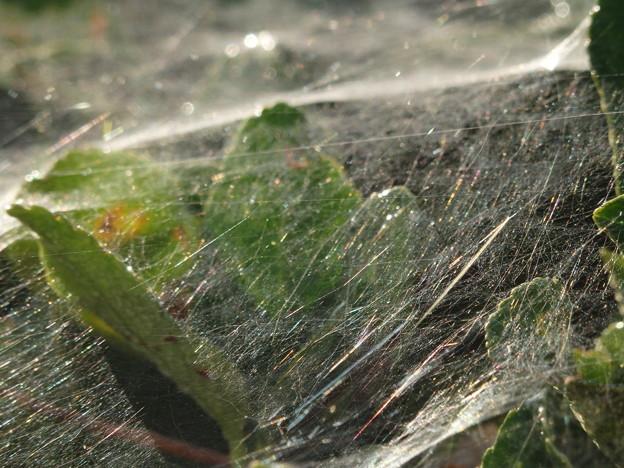 きらきら蜘蛛の巣
