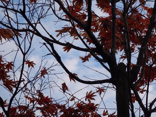 秋の一こま
