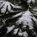 雪 降りました~