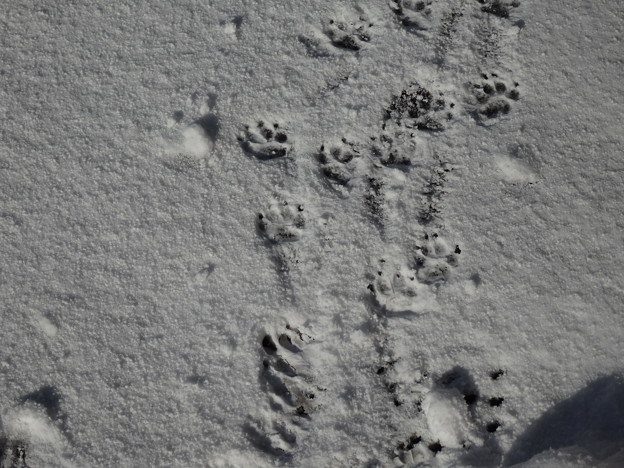 らむの足跡