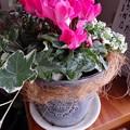 素敵なお花をいただきました