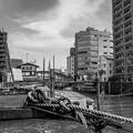 Photos: G300624-柳橋2